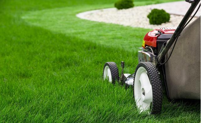 马尼拉草坪,掌握好那些,草坪长得好