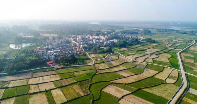 惠州茂沁绿化草业公司的绿化草坪基地