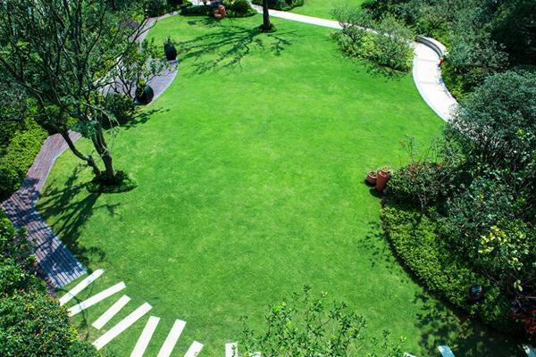 广东绿化草坪基地