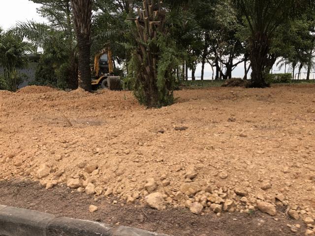 深圳绿化草坪:市民诘问深圳湾公园大片绿油油的草坪为何被铲,相关部分回应