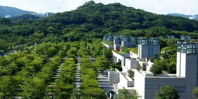 深圳绿化草坪