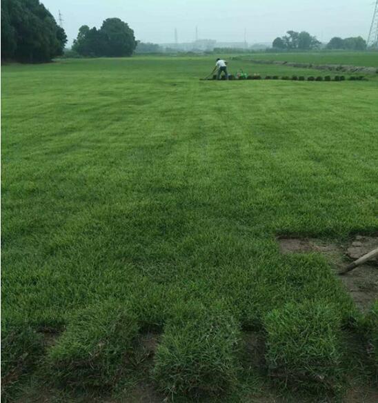 绿化草坪铺种施工方案