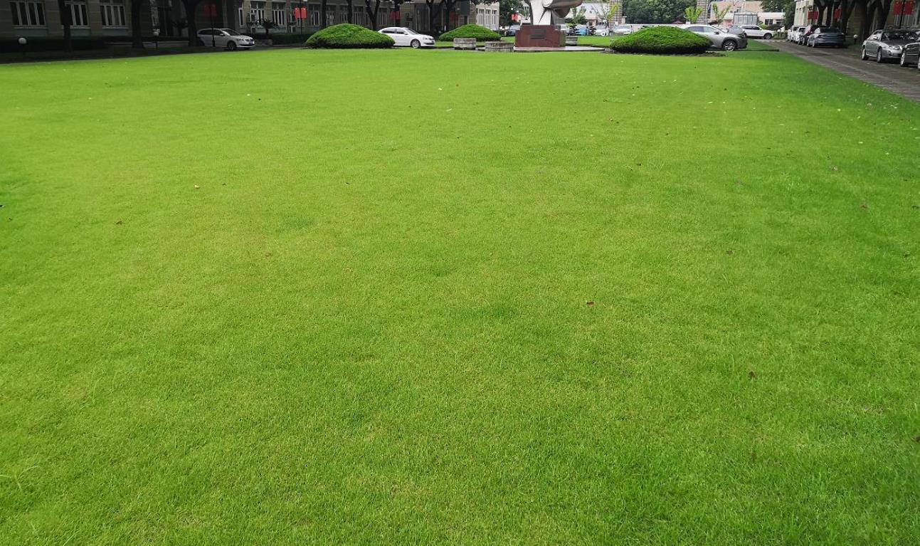 草皮多少钱一平方米