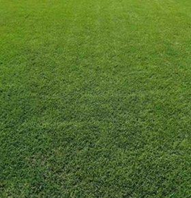 茂沁绿化草场绿化草皮基地