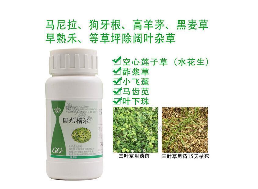 马尼拉草的杂草防除如何选择合适的除草剂?
