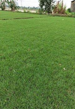 广西宾州草场销售