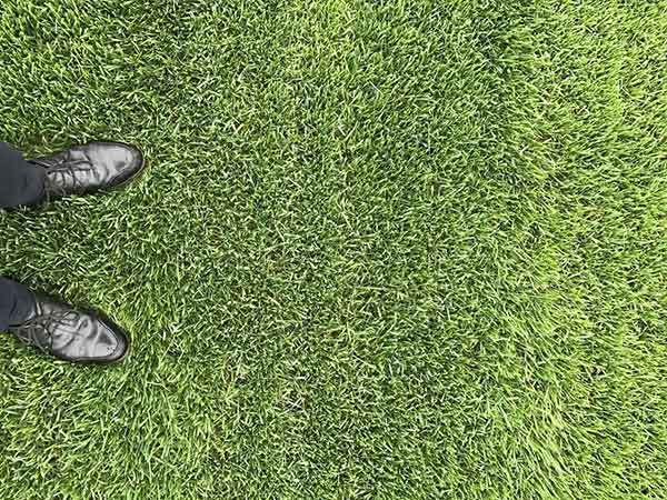 高羊茅草坪和马尼拉草坪有什么不同?