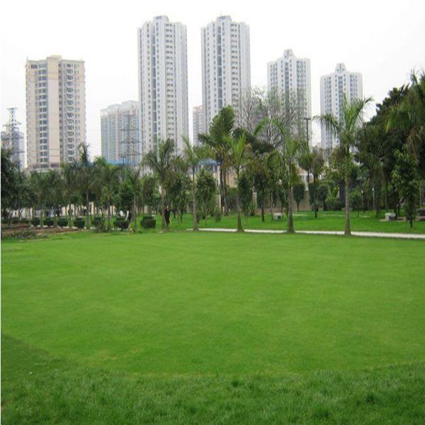 马尼拉草坪草种大体可分为冷季型草和暖季型草