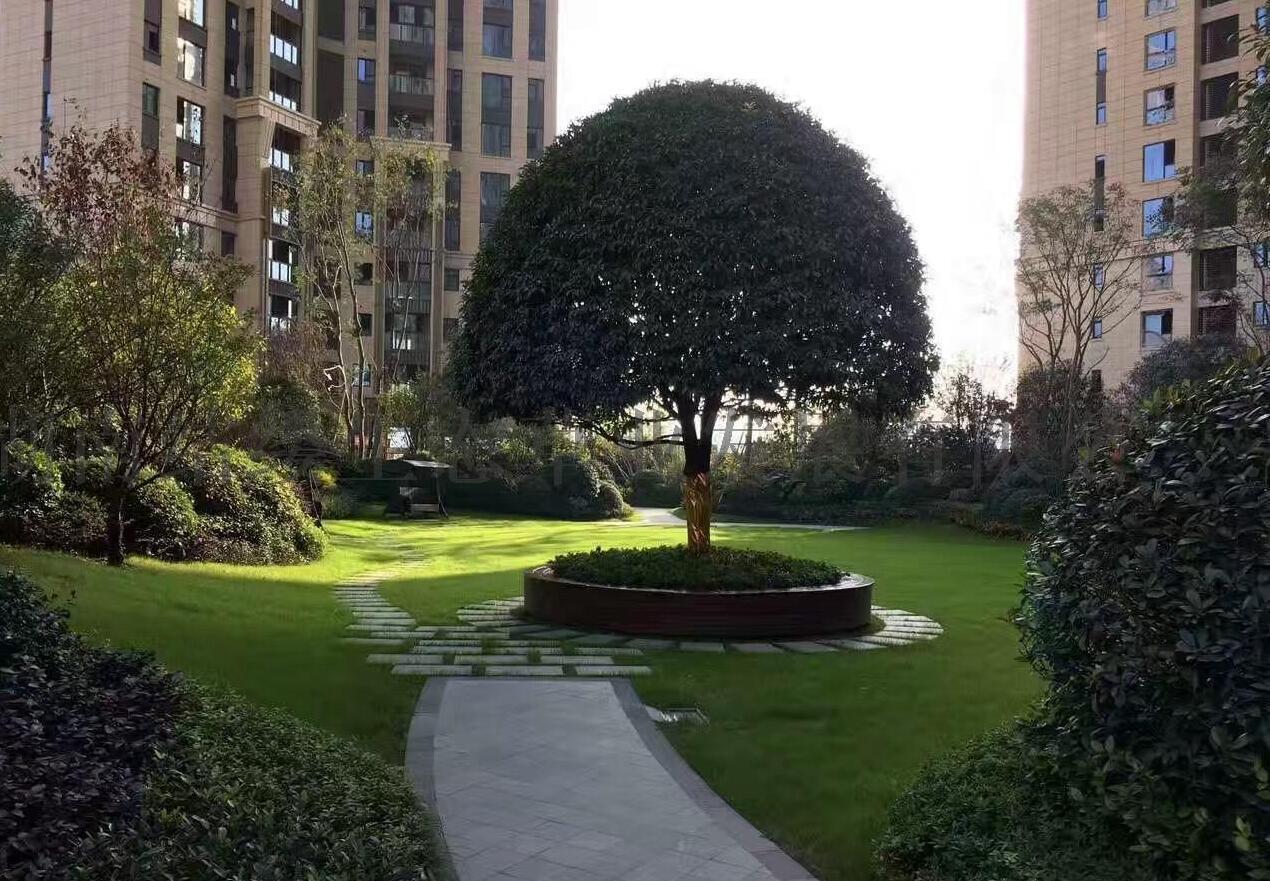 兰引三号草皮供应,惠州茂沁绿化常年供应优质兰引三号草