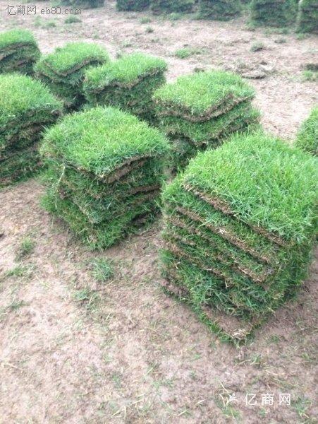 兰引三号草皮供应-台湾草皮卷多少钱一平方米?