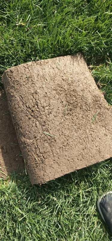 茂沁绿化草坪基地提供优质马尼拉草坪一平多少钱?
