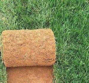 马尼拉草多少钱一平方?广东四季青草多少钱一卷?