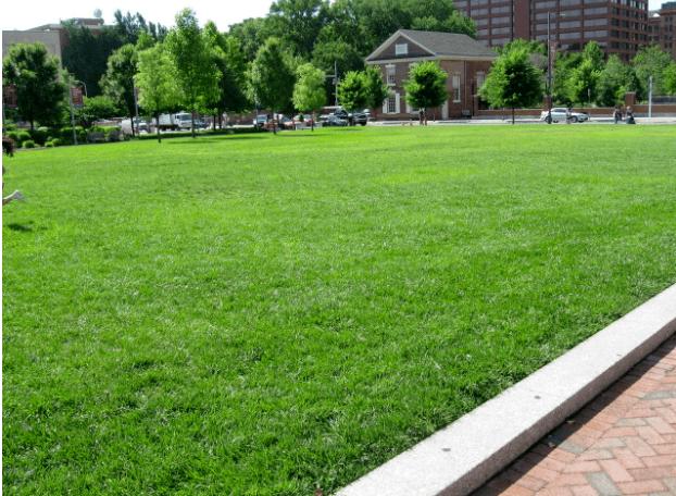 关于损害绿化草坪的修补!你必须知道的知识