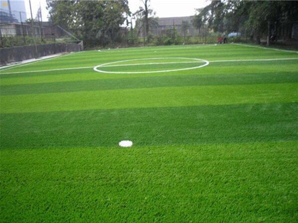 绿化草皮的分类