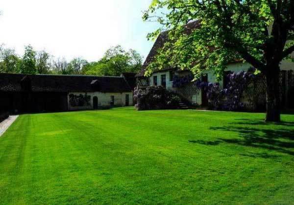 室外绿化草坪种什么好?