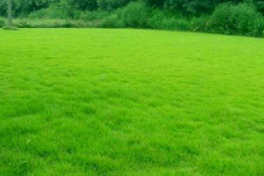 茂沁绿化 __ 带泥土台湾草坪,草卷,草皮