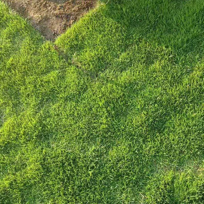 惠州茂沁草坪绿化