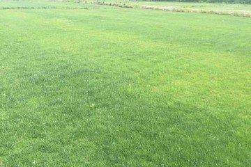 茂沁绿化草皮种植基地
