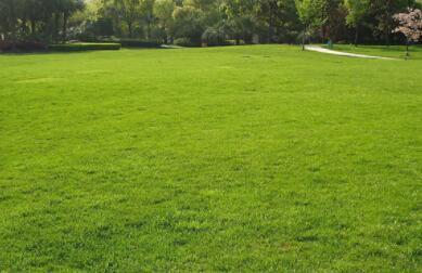 惠州茂沁草坪绿化基地