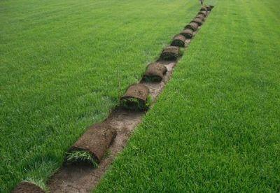 茂沁绿化草坪