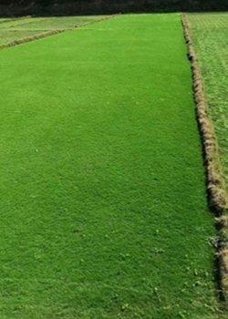 茂沁绿化草卷