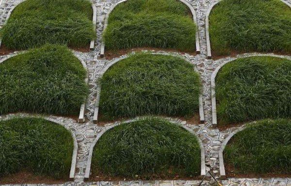 早熟禾果实多少天抽芽?早熟禾多短工夫出毛病?