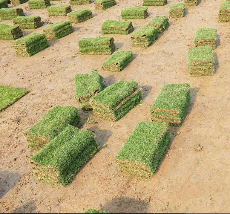 台湾草价格