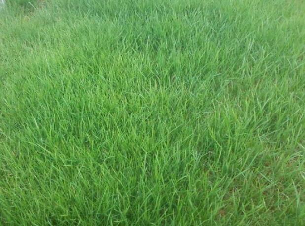 台湾草卷价格