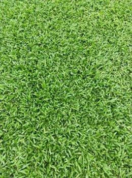 惠州茂沁草卷供应