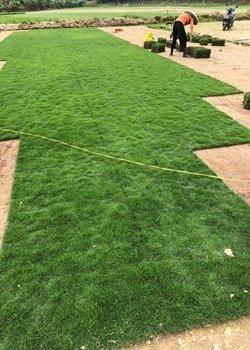 绿化草卷批发