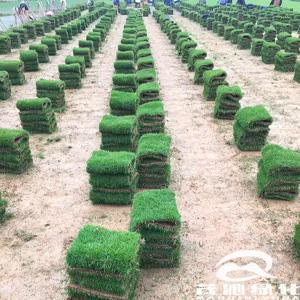 台湾草草卷