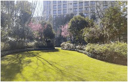 草坪绿化工程