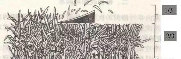 修剪高度(留茬高度)是修剪后地上枝条的垂直高度。