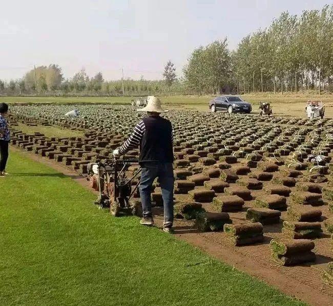 园林绿化草坪