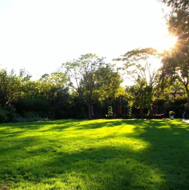 为草坪栽培庇荫树