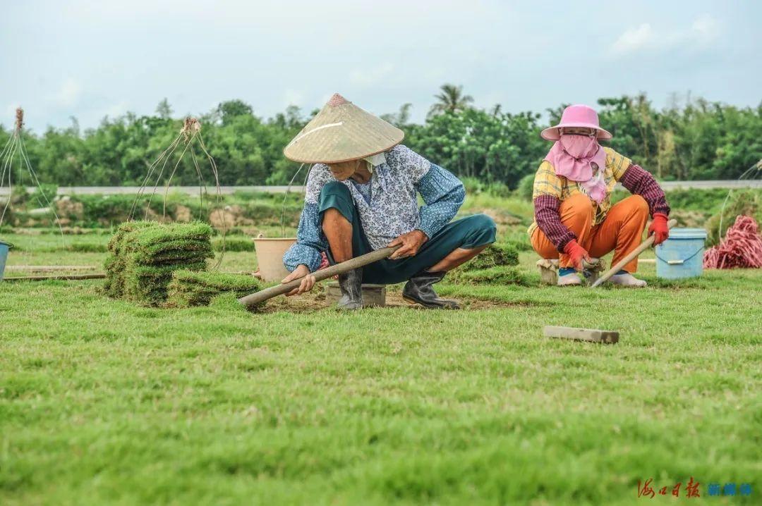 绿化草皮种植基地